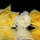 Roses white and yellow. by Dipali S