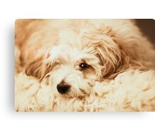 Where does the dog start and the throw end? Canvas Print