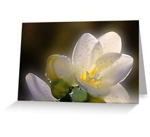 A beautiful unknown white flower Greeting Card
