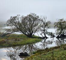 Murray River Lagoons - Walwa Victoria by Bev Woodman
