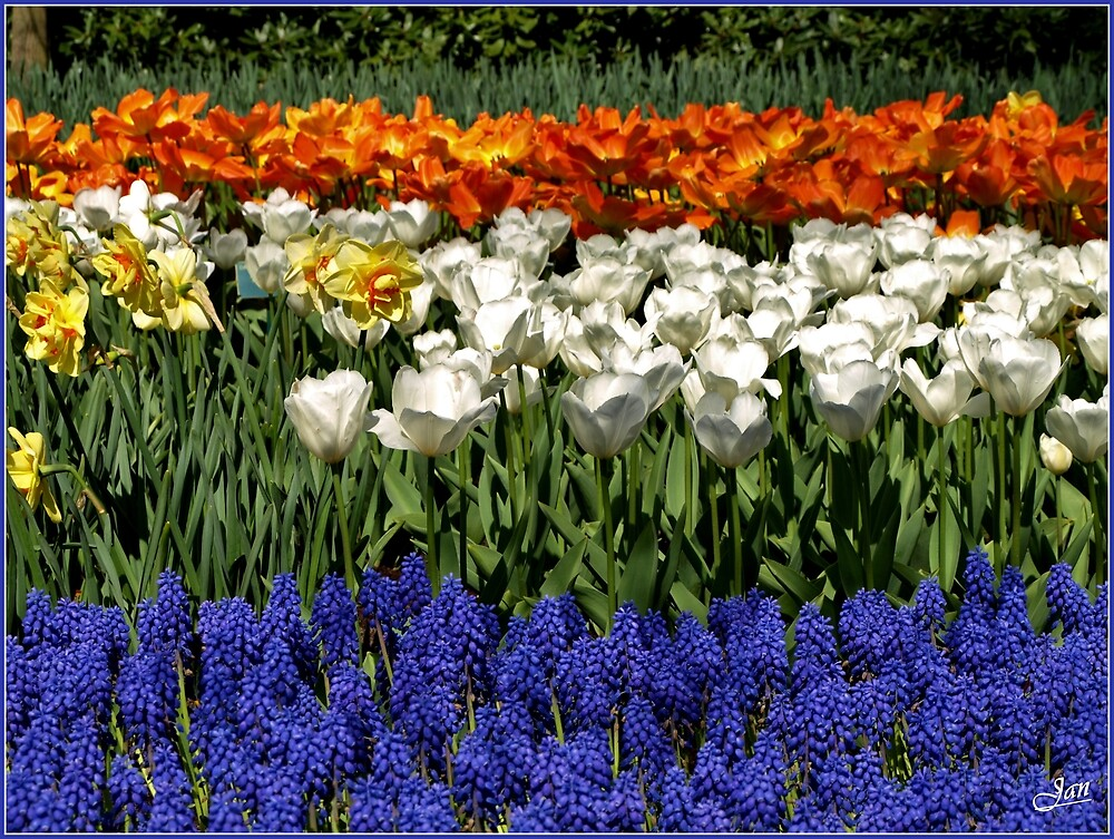 Spring Flower Combinations. by Janone