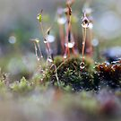 Macro World by Astrid Ewing Photography