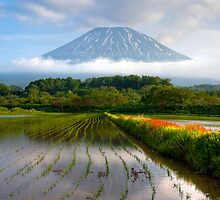 Yotei rice field II by Paul Malandain