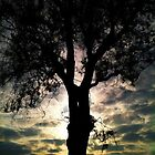 Tree Silhouette  by xxkellywxx