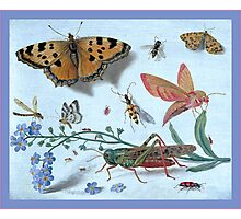 Illustration Of Insects Photographic Print