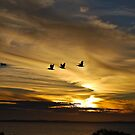 Pelicans in flight by Ian Berry