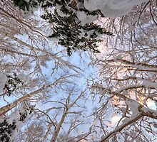 Looking Up by Paul Malandain