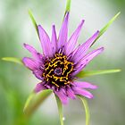 A Bee's idea of Heaven by Deborah Clearwater