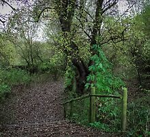 Pathway to the woods by NathanGordon