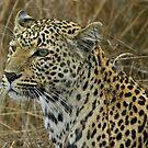 Majestic leopard by jozi1