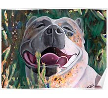 La Joie De Vivre Pit bull Enjoying Life Poster