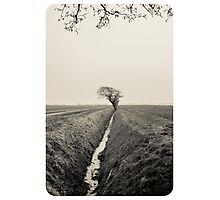 B&W Landscape Triptych III Photographic Print