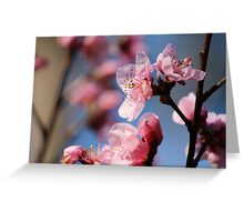 Springtime Peach Blossoms III Greeting Card