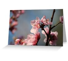 Springtime Peach Blossoms IV Greeting Card