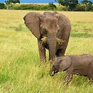 Baby Elephant with Mother - Masai Mara - Kenya by Charuhas  Images