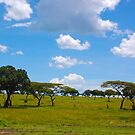 Masai Mara 3 - Kenya by Charuhas  Images