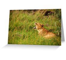 Lion  - Masai Mara Greeting Card
