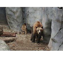 Bear Troubles Photographic Print