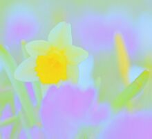 Daffodil In A Crocus Garden by pseth