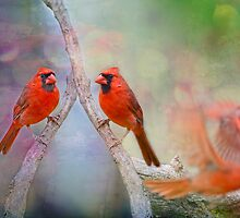 Redbird Fantasy by Bonnie T.  Barry
