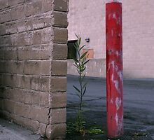 Wall Plant Red by Andrew Nelson