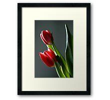 Tulip Power Framed Print
