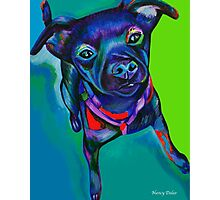 Stay! Dog sitting and staying. Patterdale/Fell Terrier mix pup Photographic Print