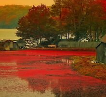 Vintage Cranberry Farm by Gina Cormier