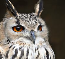 Bengal Eagle Owl by Ralph Goldsmith