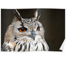 Bengal Eagle Owl Poster