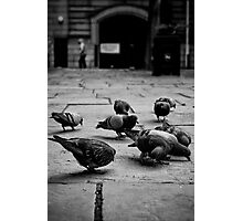 City Birds Photographic Print