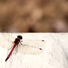 Dragonfly by KendraJKantor