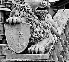 lion by eddy88