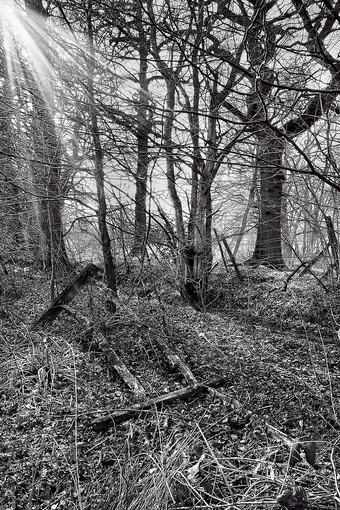 Misty Morning by Dave Godden