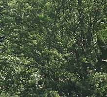 Panoramic Triple View - Green Trees by TheShutterbugsG