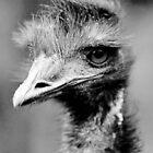 Emu by Ladymoose