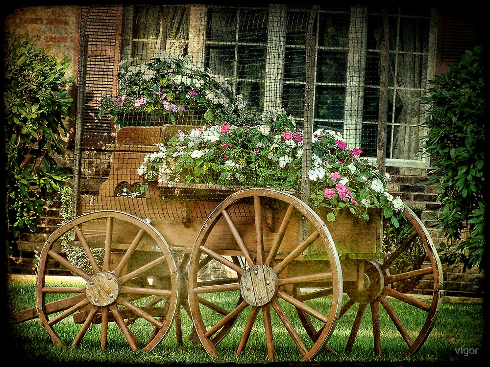 Posies in the front yard by vigor