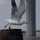 The Seagull by janfoster
