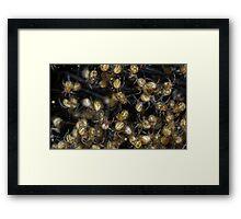 Spider Nursery  Framed Print