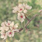 Pear Blossom by Aimee Stewart