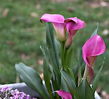 Cala Lilies  with Friends by Sherry Hallemeier