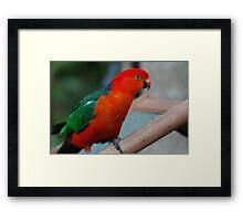 Wild Parrot Visit Framed Print