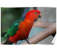 Wild Parrot Visit Poster