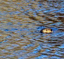 Beaver by Kathleen Daley