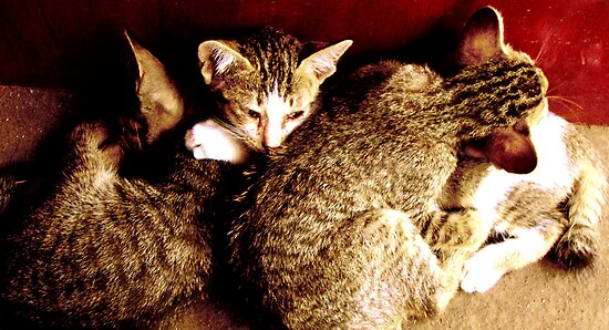 kittens in indonesia by lainer15