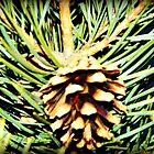Mystics Pine cone by Brandon Harris
