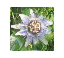 Passiflora Against Green Foliage In A Garden Scarf
