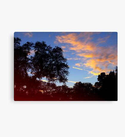 Dark trees at sunset Canvas Print