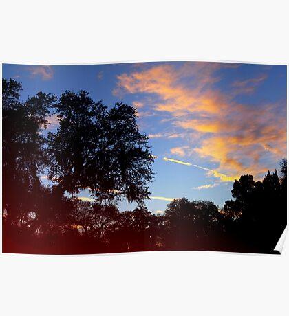 Dark trees at sunset Poster