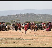 Masai Cattle market by CharlotteMorse